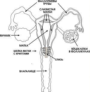 vaginalnaya-suhost-pri-polovom-akte